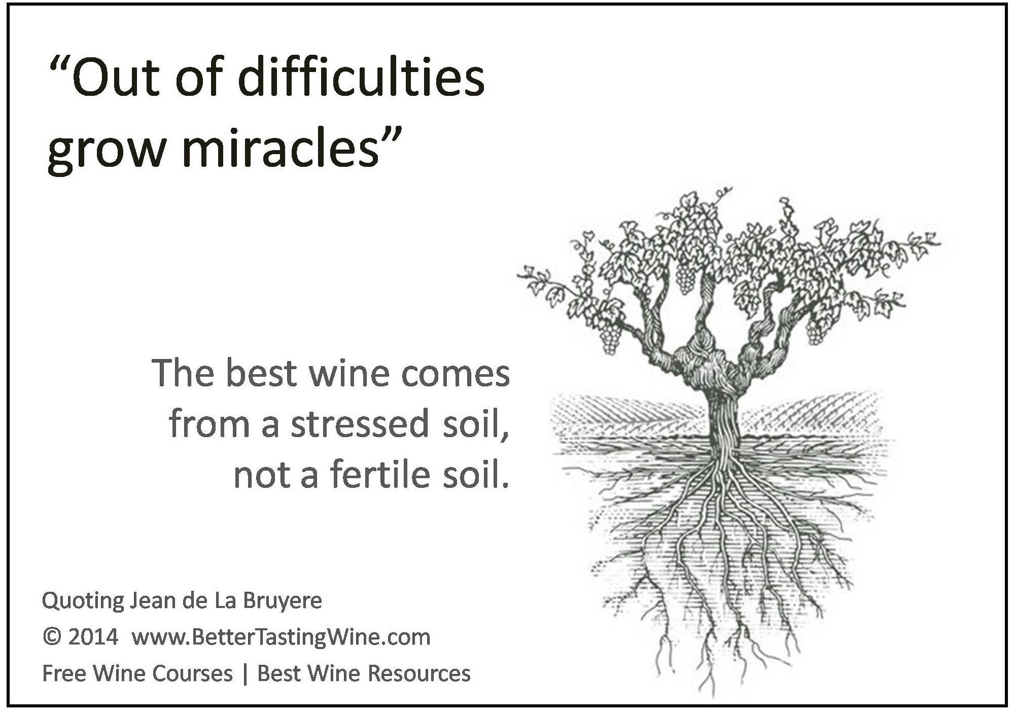 Wine Quotes | Bettertastingwine Wine Quotes Wine Jokes Wine Humor